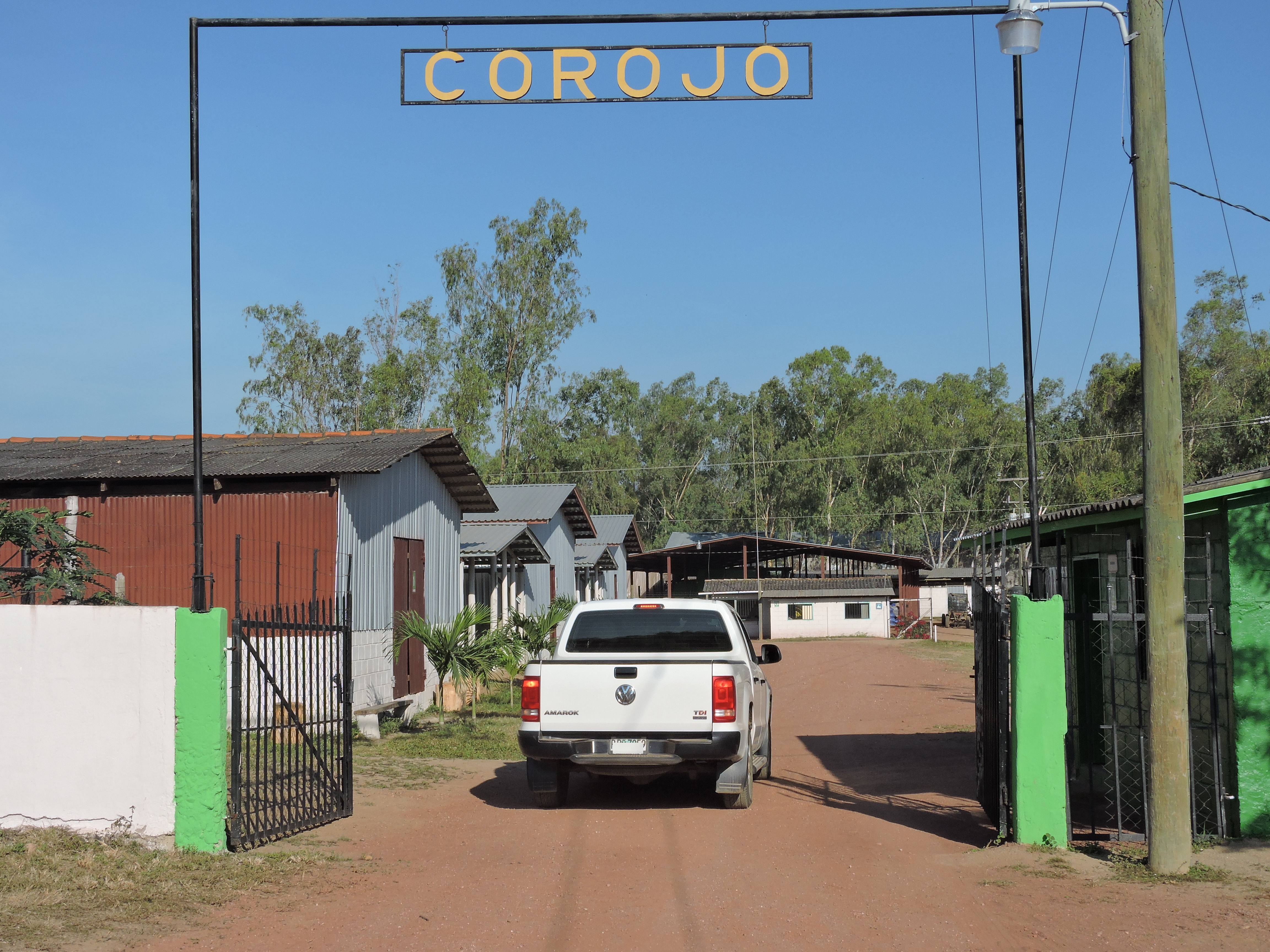 Corojo_Farm_Eiroa_